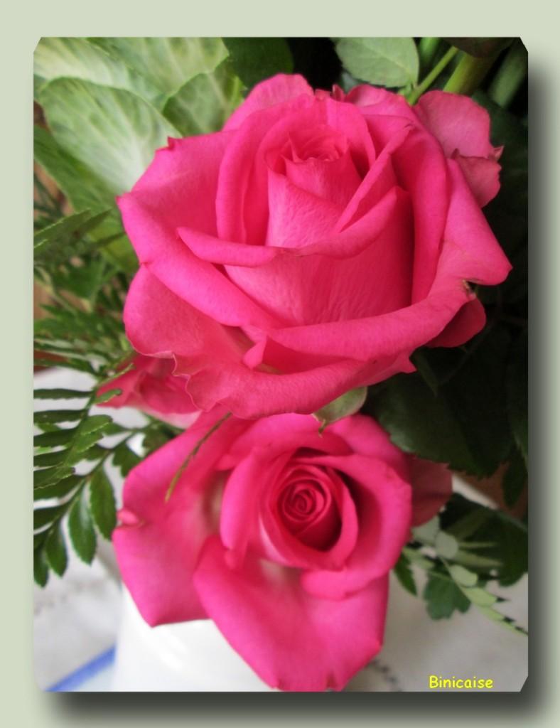Binicaise fleurs et plantes for Un bouquet de roses