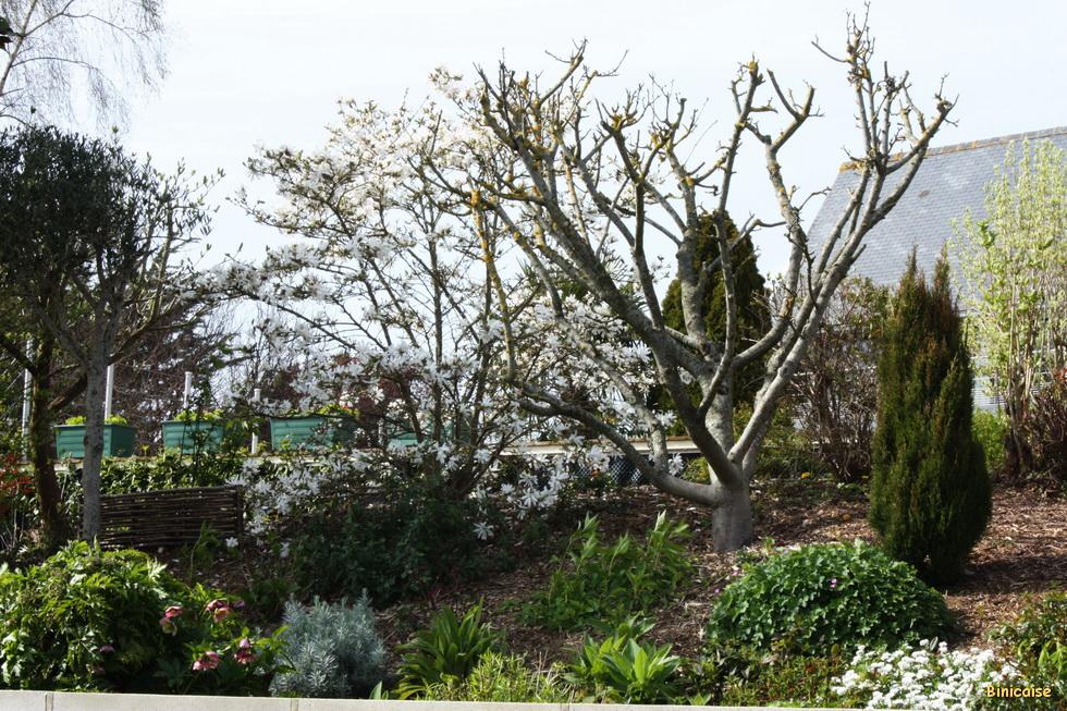Jardins à Binic 03