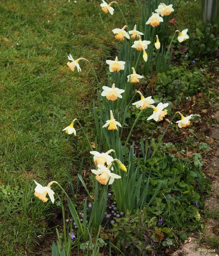 Printemps en fleurs 1