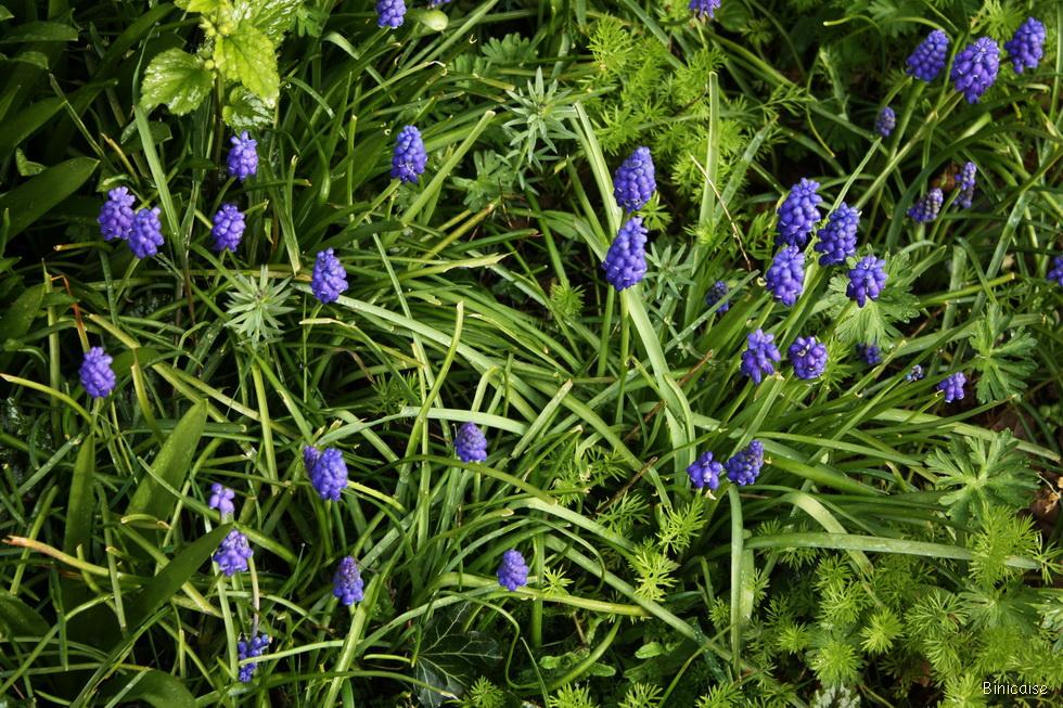 Printemps en fleurs 2