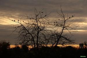 L'arbre aux oiseaux 02