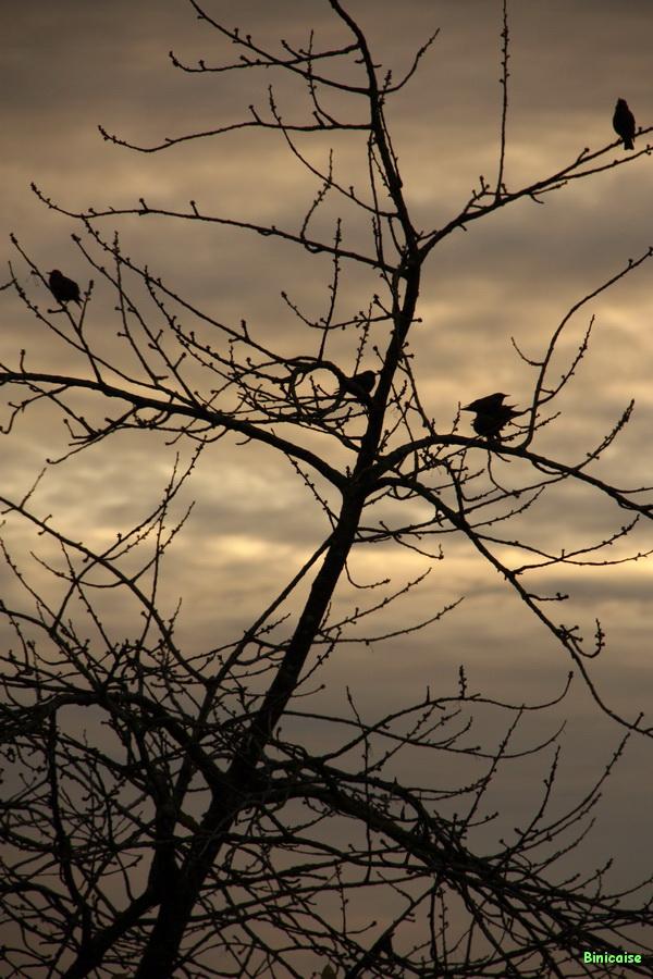 L'arbre aux oiseaux 03