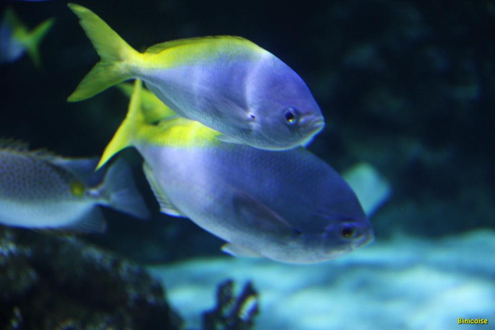 Aquarium La Rochelle 36