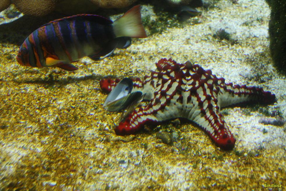 Aquarium La Rochelle 38