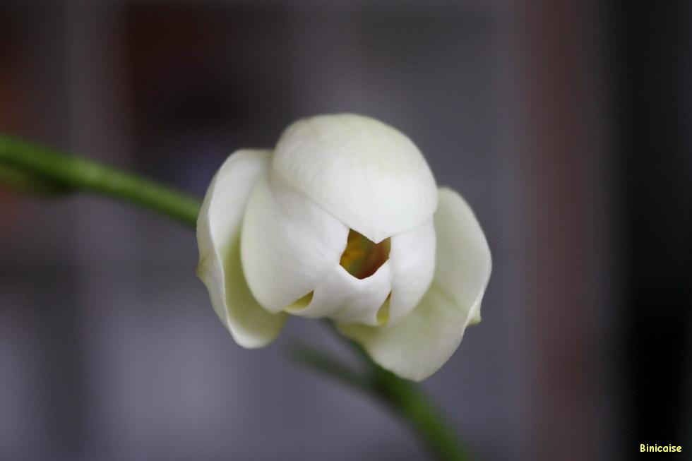 Mme l'Orchidée07