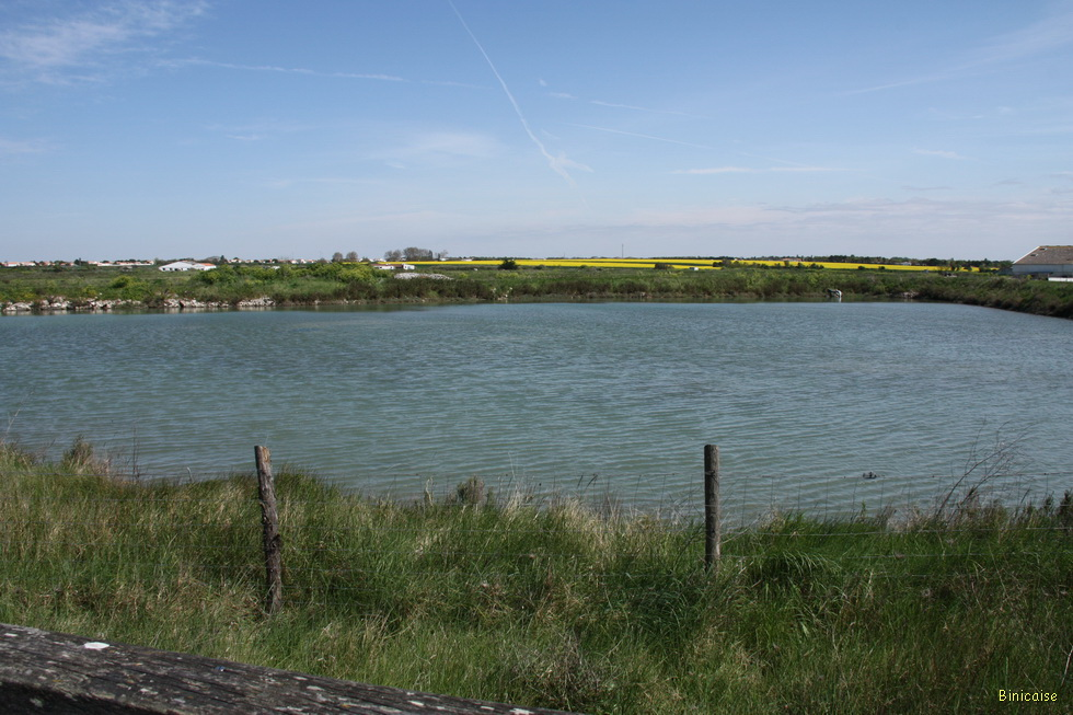 Marais Nieul sur Mer 03