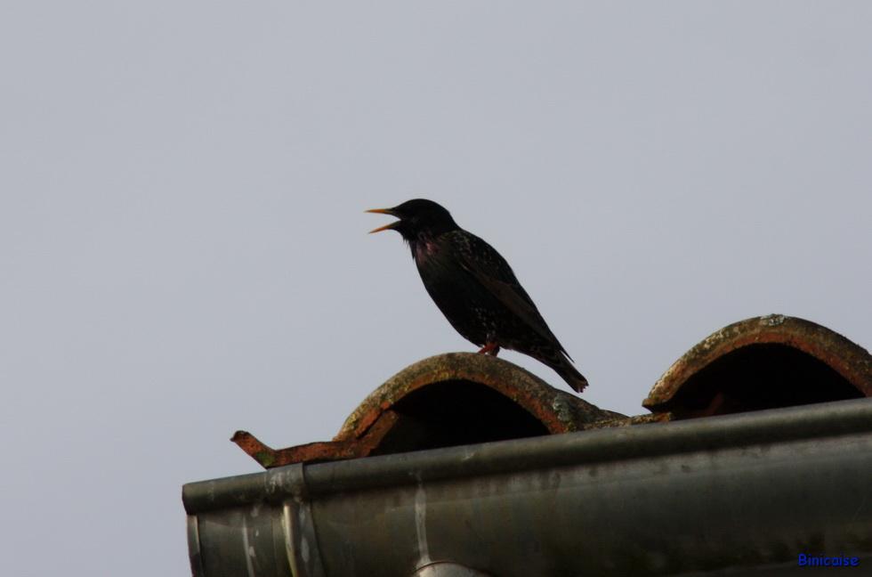 Oiseaux Balcon 03
