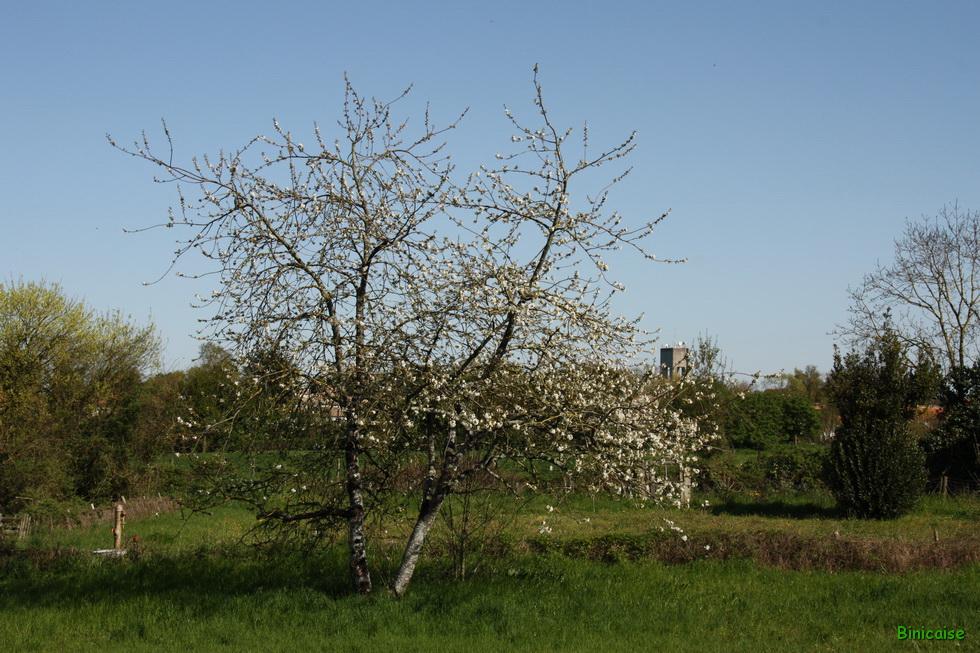 Binicaise l arbre aux oiseaux printemps for Vue de ma fenetre