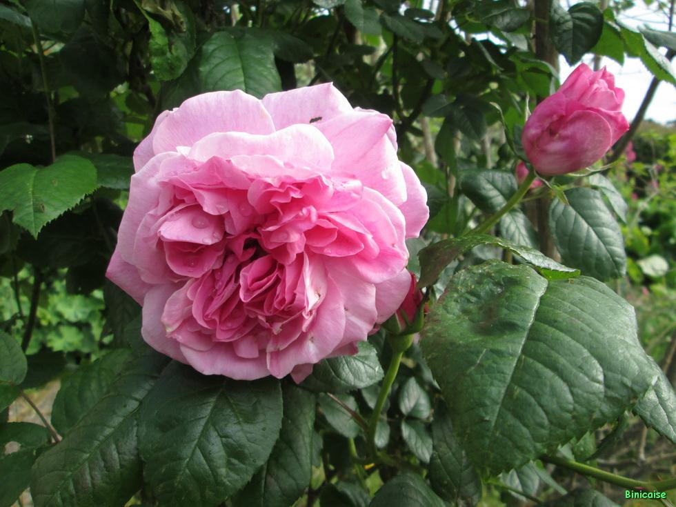 Jardins Mai 2015 02