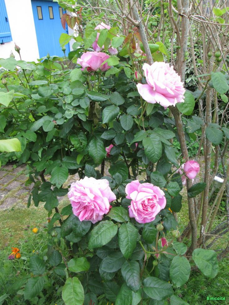 Jardins Mai 2015 03