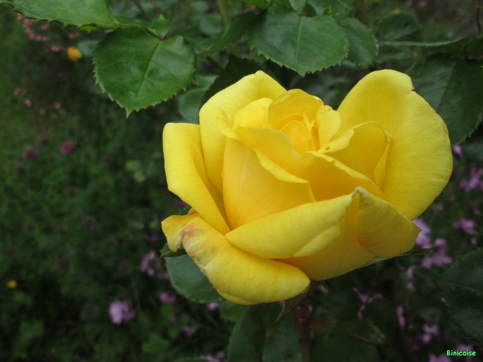 Jardins Mai 2015 05