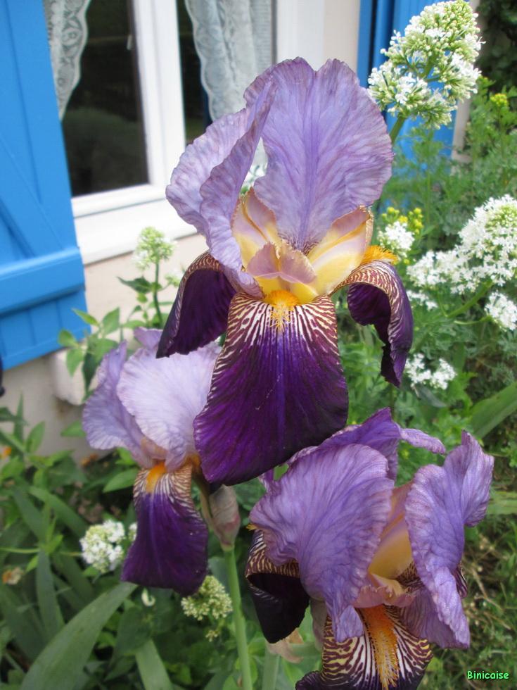 Jardins Mai 2015 08