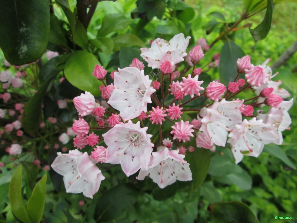 Jardins Mai 2015 09