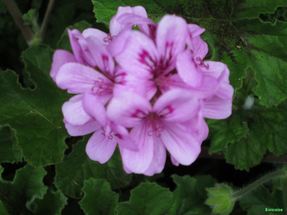 Jardins Mai 2015 16