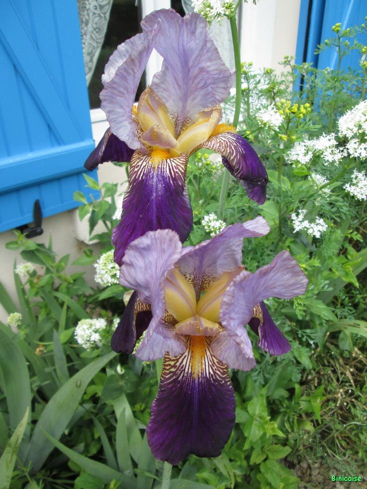 Jardins Mai 2015 24