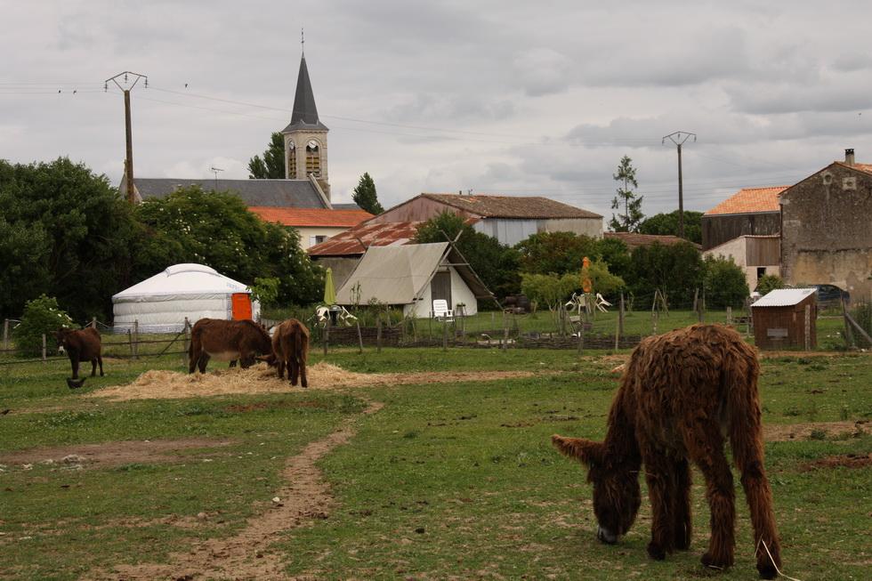 Anes du Poitou 06_2